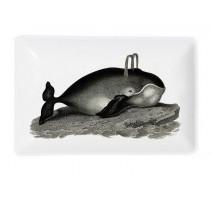 Vide poche Baleine, Cubic