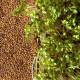 Graines à germer cresson bio, radis et capucine
